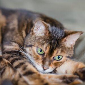 Gwynne's cat Leo